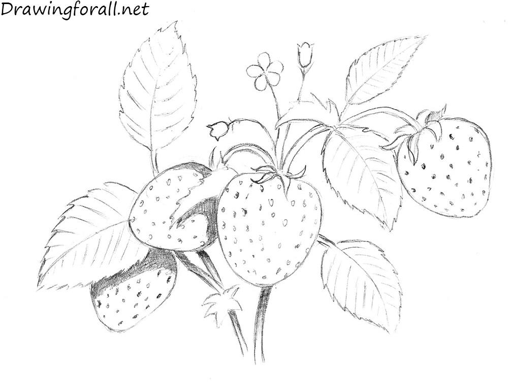 Drawn strawberry strawberry flower Net Strawberry drawing a How