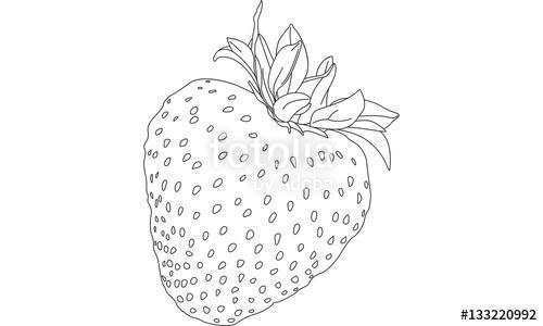 Drawn strawberry strawberry line Strawberry Stock Drawing