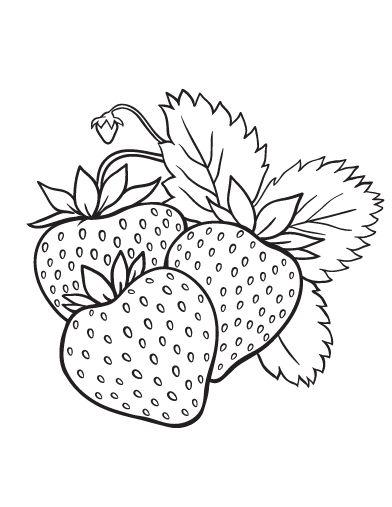Drawn strawberry strawberry line Page Pinterest download PDF coloring