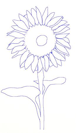 Drawn sunflower Step draw a Step to