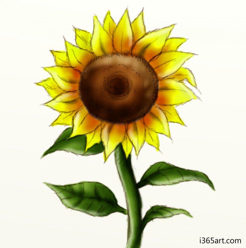 Drawn sunflower Pic Sunflower Drawing Sunflower Art