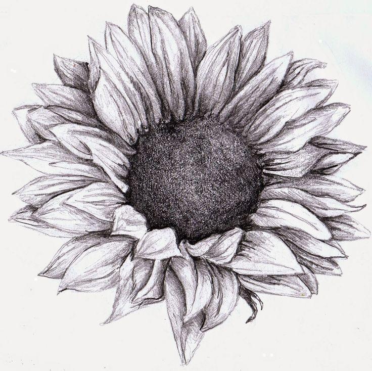 Drawn sunflower Google zoeken drawing sunflower Pinterest