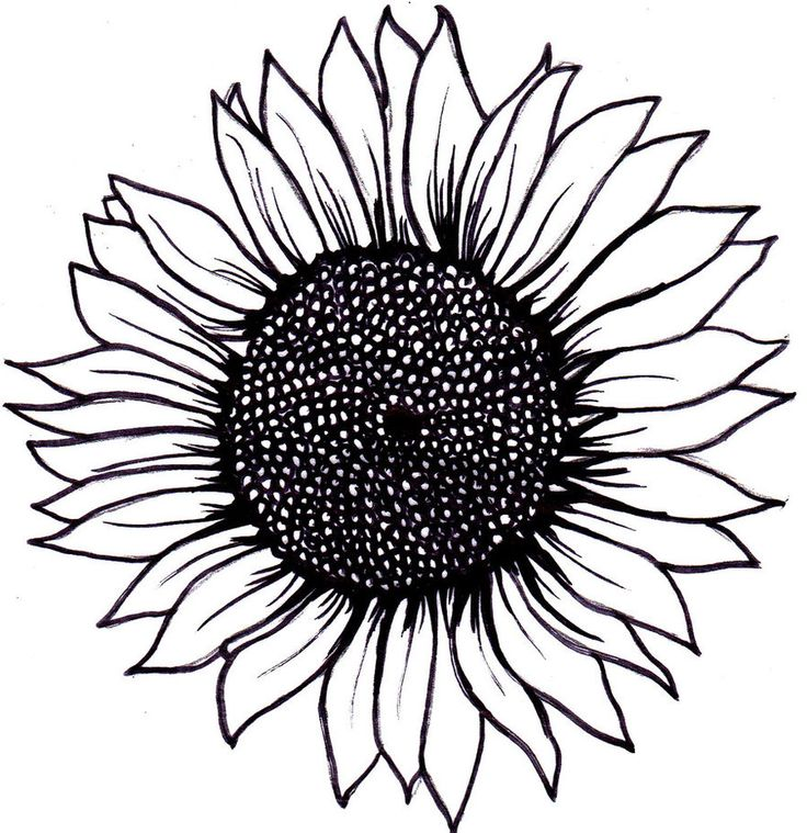 Drawn sunflower Ideas Drawing Black Pinterest Sunflower