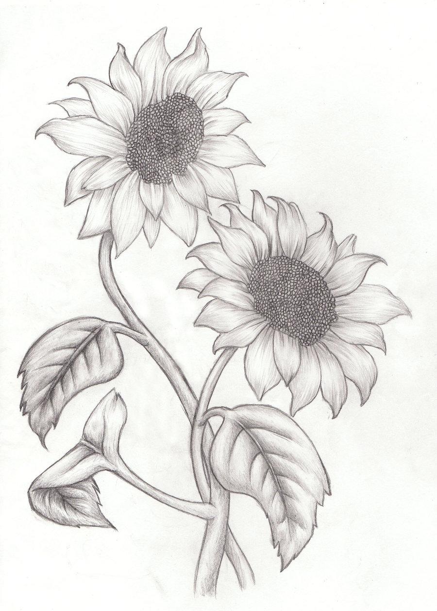 Drawn sunflower  sunflower drawing Drawings Sunflower