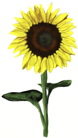 Drawn sunflower Step Draw a to How