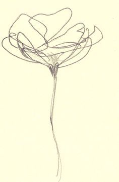 Drawn poppy line drawing On Best Drawings and Pinterest