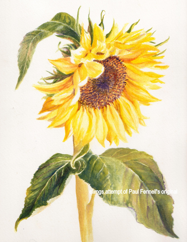 Drawn sunflower Illustration photo#27 botanical Sunflower Botanical