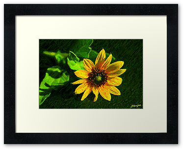 Drawn sunflower Color In sketch color pencil