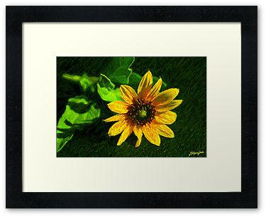 Drawn sunflower Color In sketch color pencil