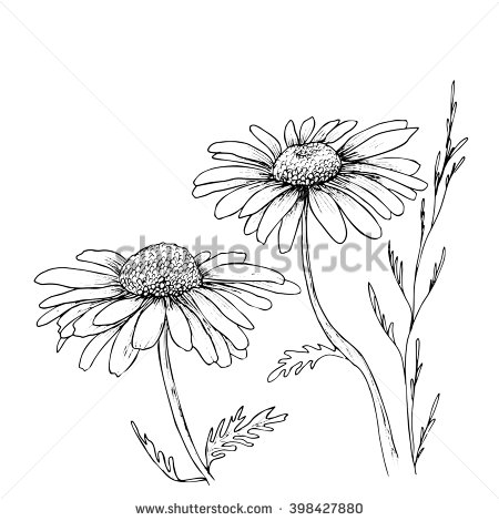 Drawn photos flower Hand Flowers Hand Flowers Vector