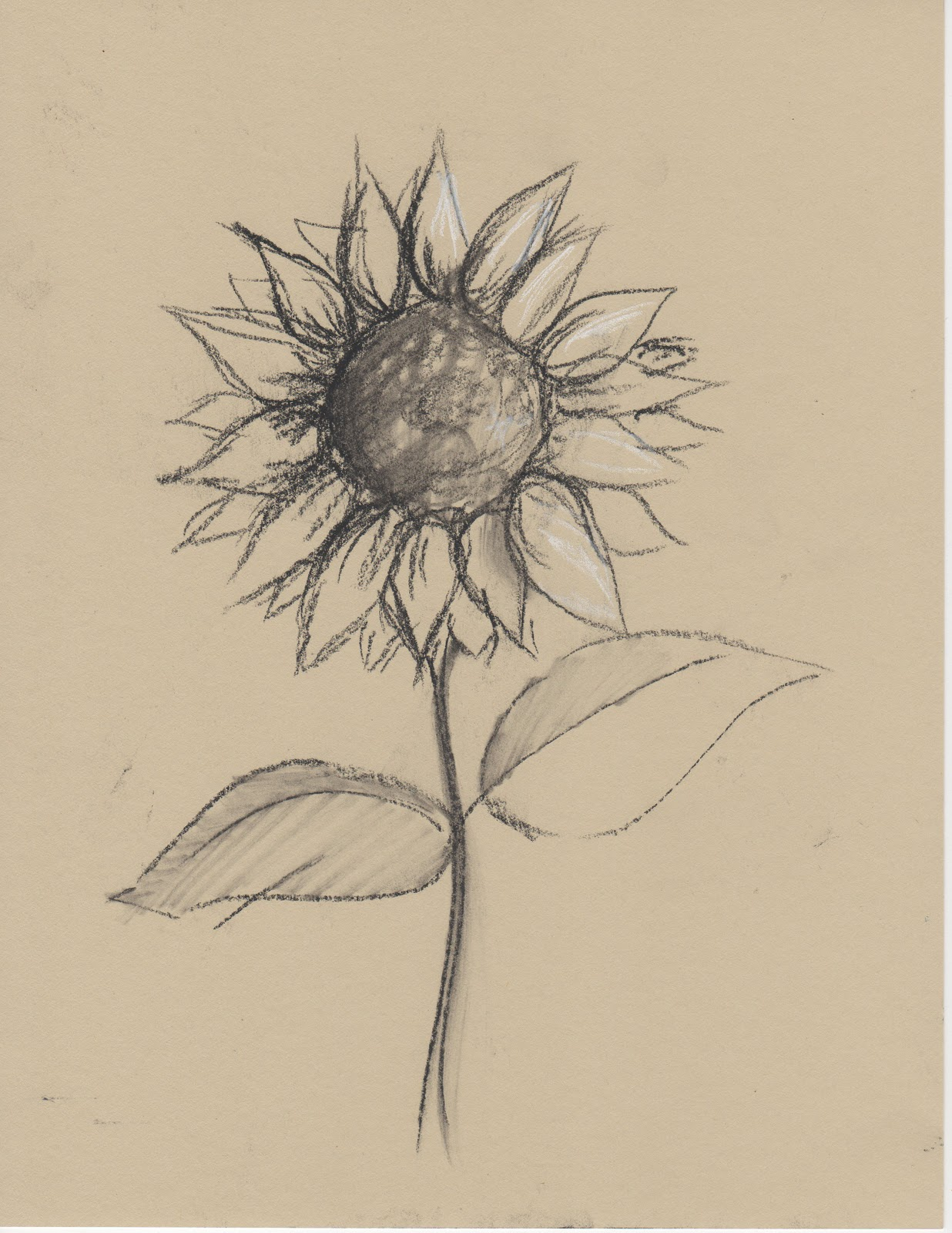 Drawn amd sunflower Pencil Black+and+White+Sketches+of+Flowers  even any