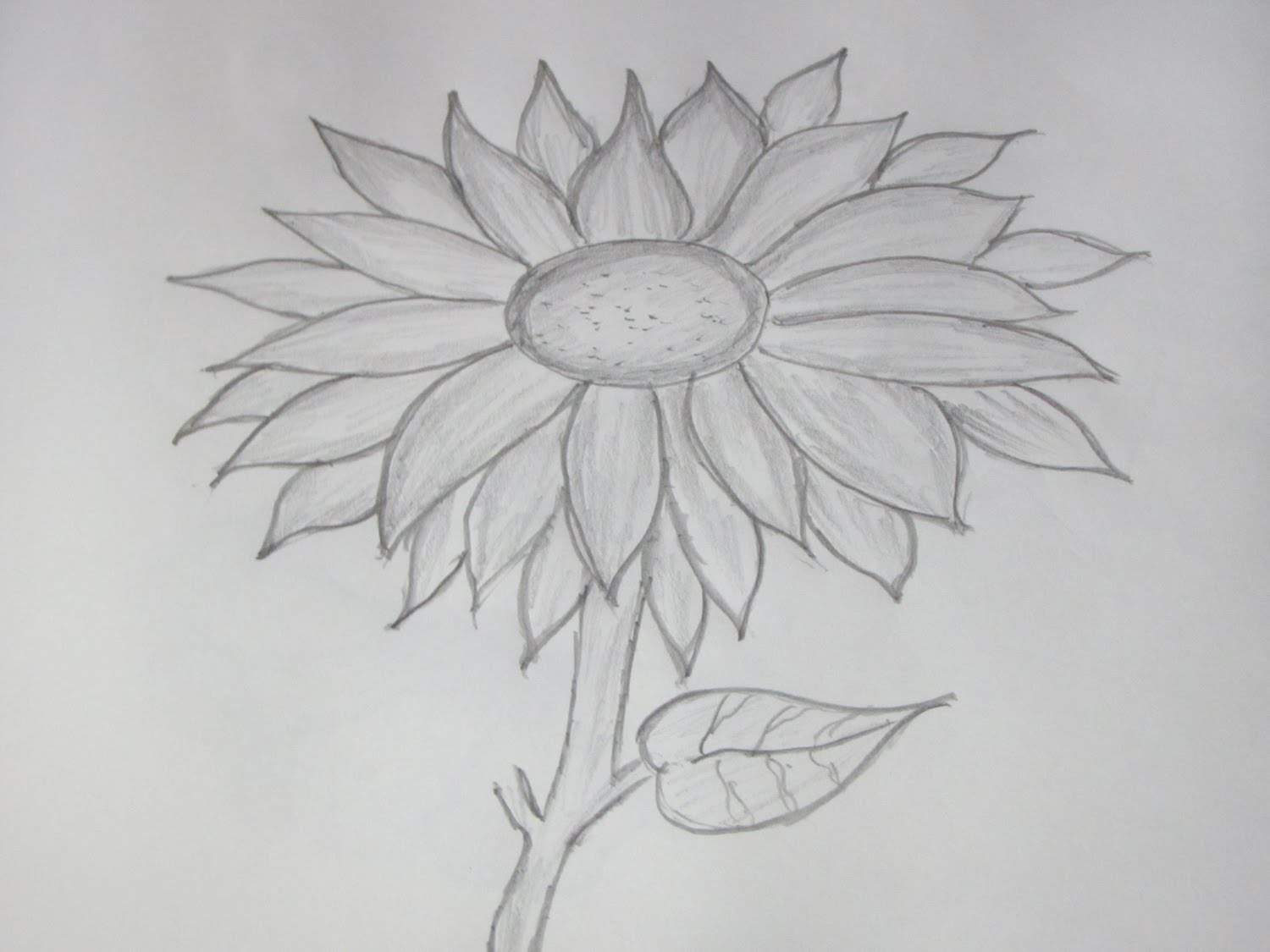 Drawn amd sunflower YouTube and Sketch Sunflower Pencil