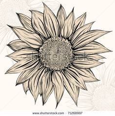 Drawn amd sunflower Uncategorized  Sunflower White drawing