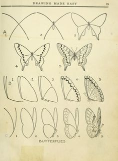 Drawn braid insect : http com young helpful