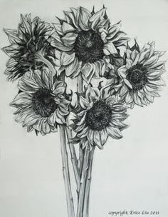 Drawn amd sunflower On Pinterest The drawing drawing