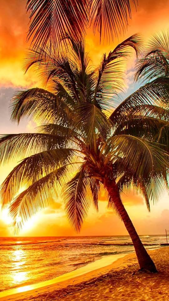 Drawn sunrise palm tree If trees sunset Palm or