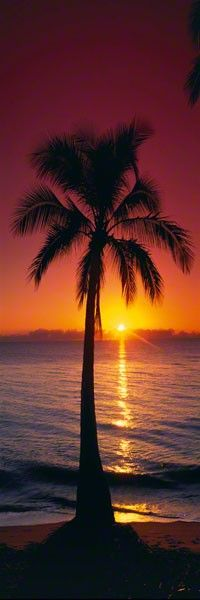 Drawn sunrise palm tree By just Lik with fantastic