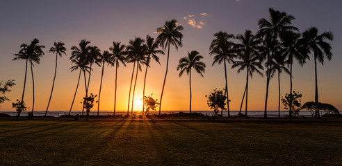 Drawn sunrise palm tree Sunrise silhouette of tree