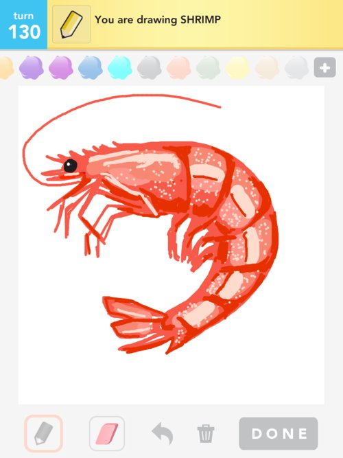 Drawn shrimp simple In How Draw Something Draw