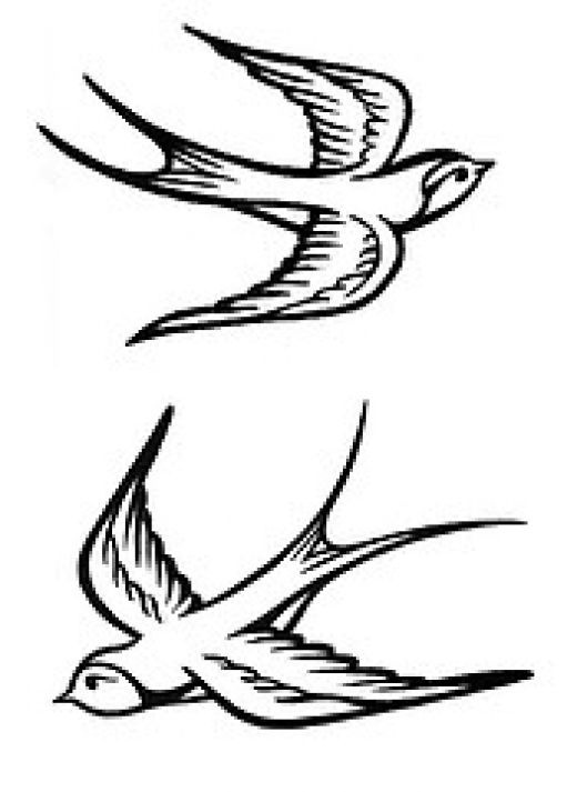 Drawn swallow #3