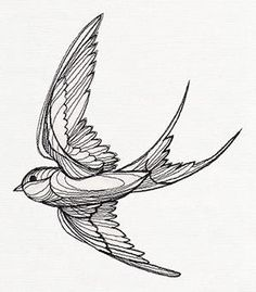 Drawn swallow #1