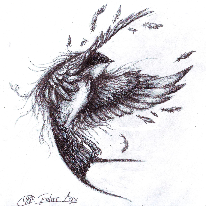 Drawn swallow #9