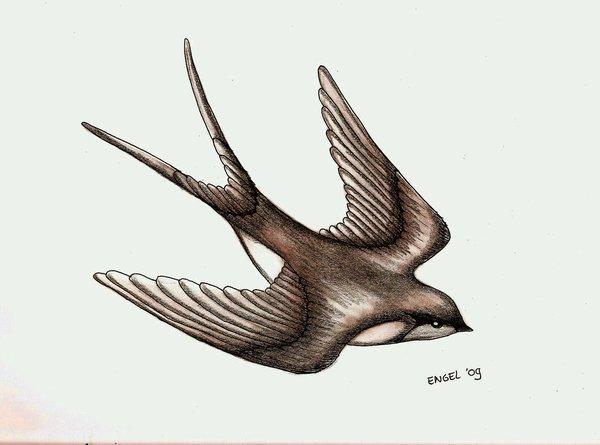 Drawn swallow #4