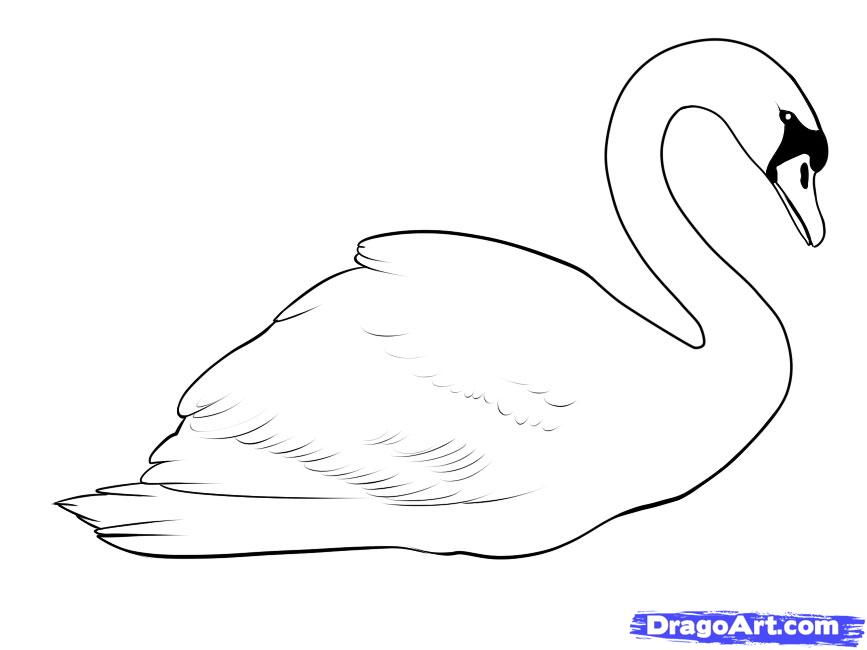 Drawn swan Draw Online Birds Animals a