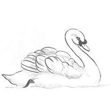 Drawn swan Tattoo and perfectly on drawn