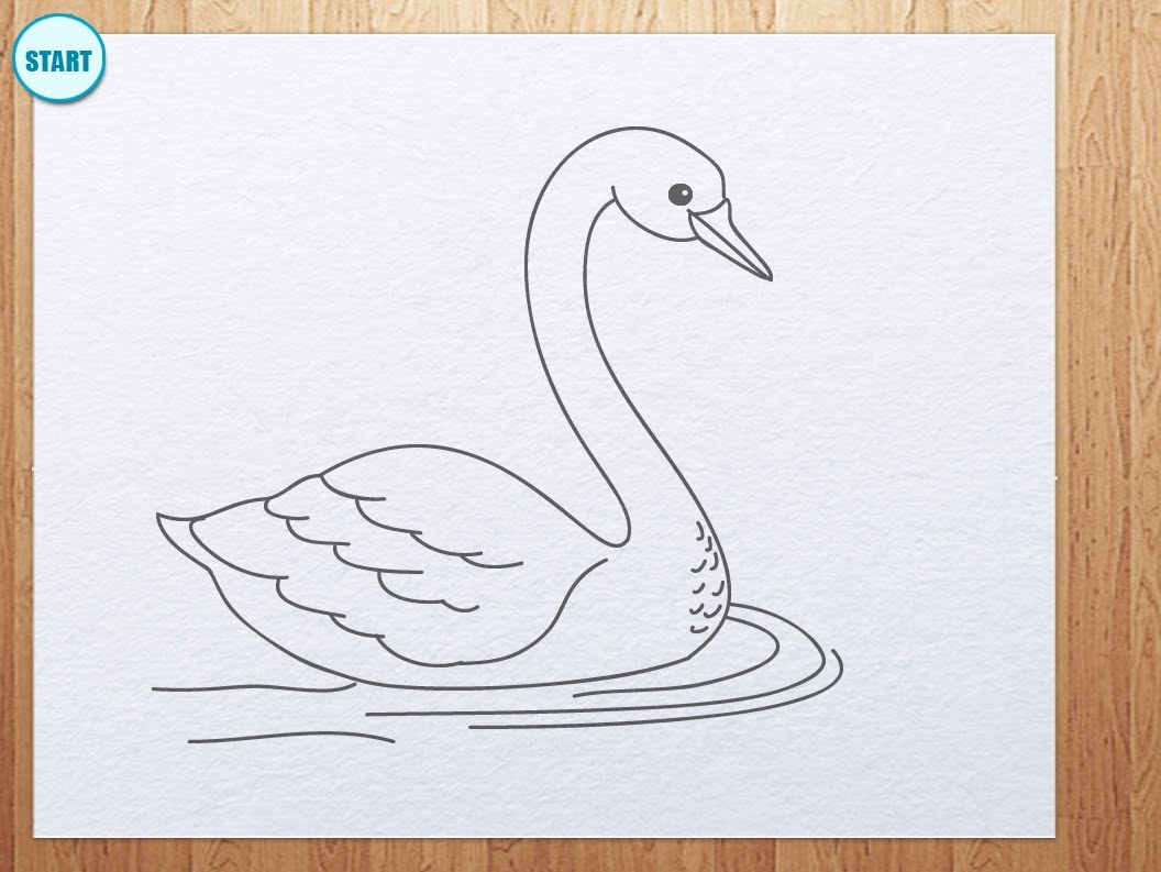 Drawn swan Draw How to to draw