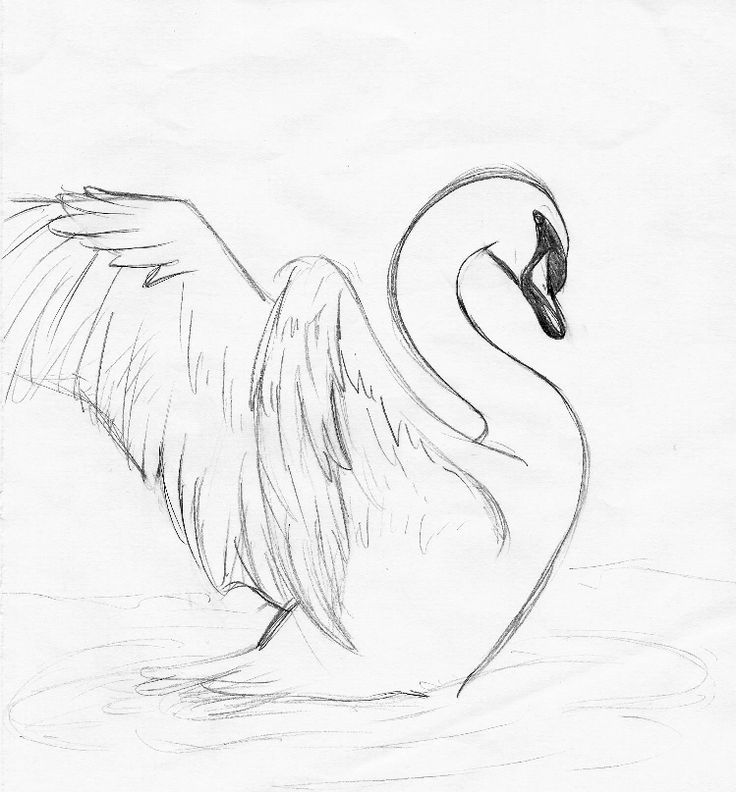Drawn swan Pin images more on this