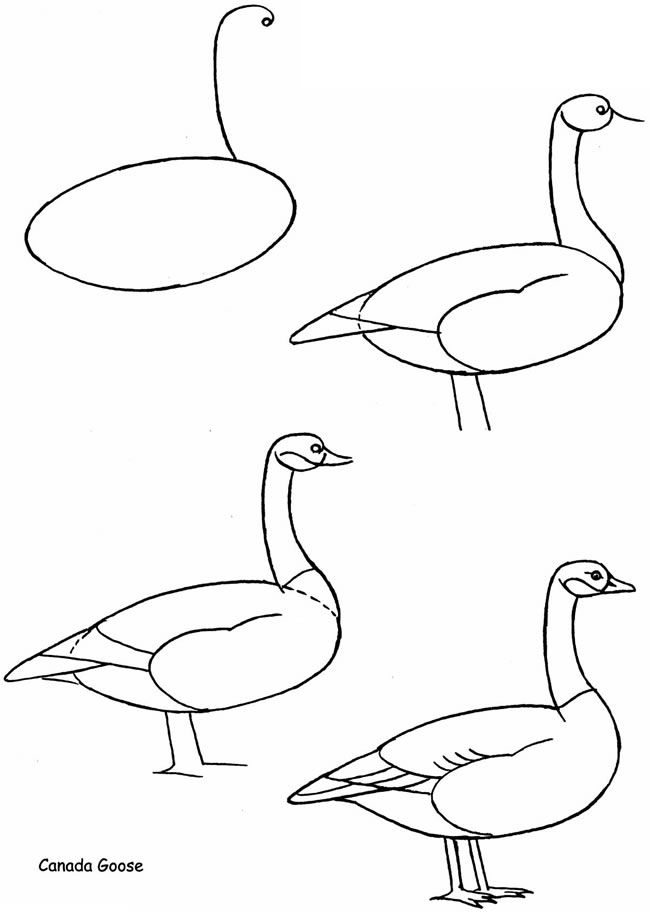 Drawn brds baby bird Publications Goose Best to on