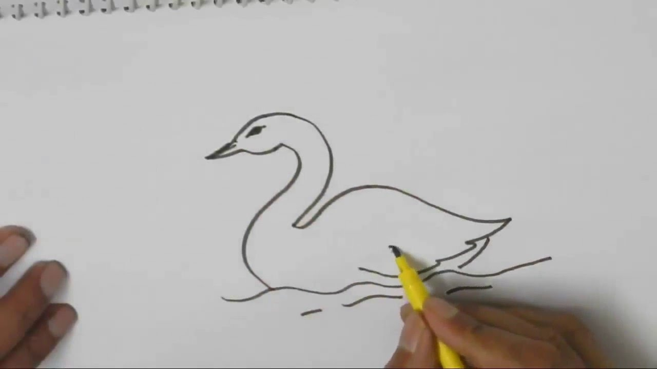 Drawn swan Draw beginners for children a