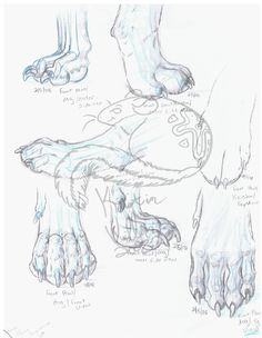Drawn sykol nature Labrador  Еноты of (320×320)