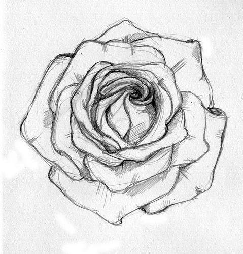 Drawn tattoo rose #10