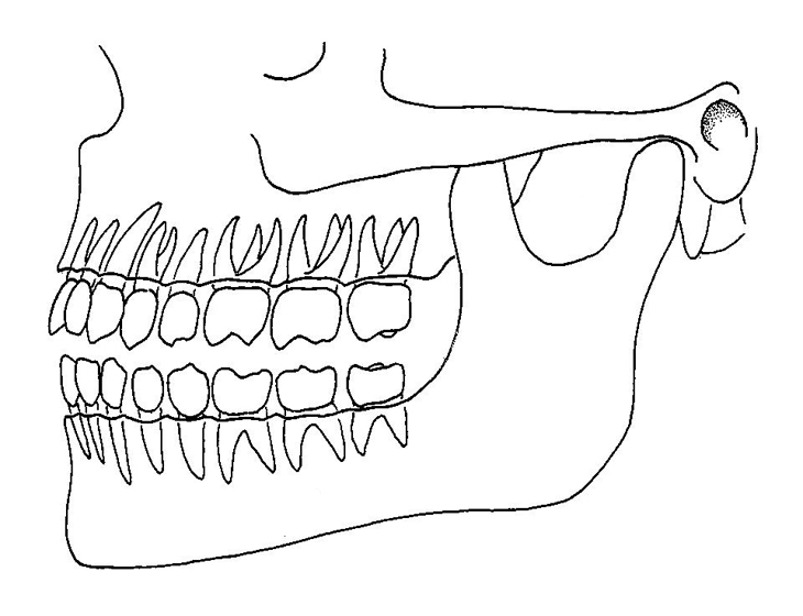 Drawn teeth human  Image teeth Gallery drawings