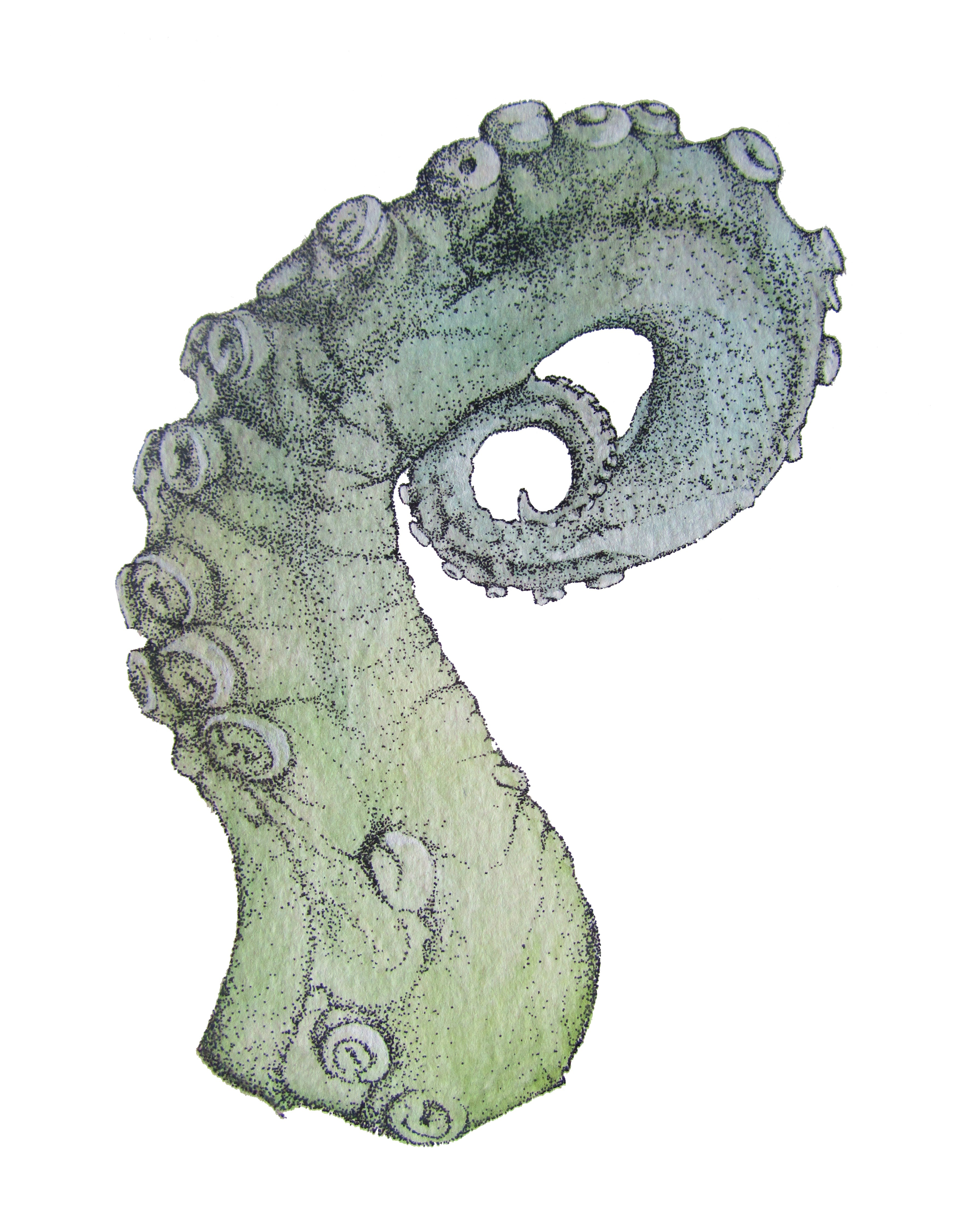 Drawn tentacle I / octopus kraken scientific