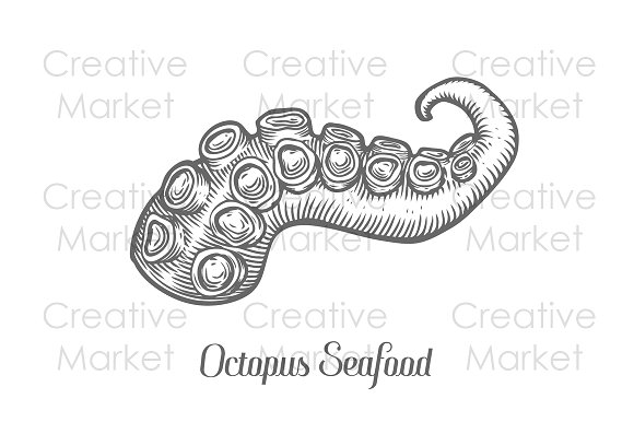 Drawn tentacle Octopus hand drawn Octopus seafood