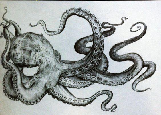 Drawn tentacle Octopus Octopus Pencil Tentacles Art