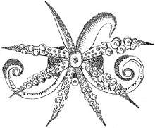 Drawn squid tentacle The squid view bobtail limb