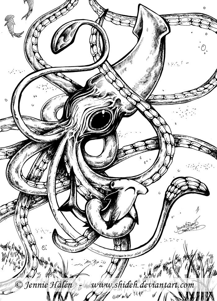Drawn squid squid monster Giant Pinterest Best on 25+
