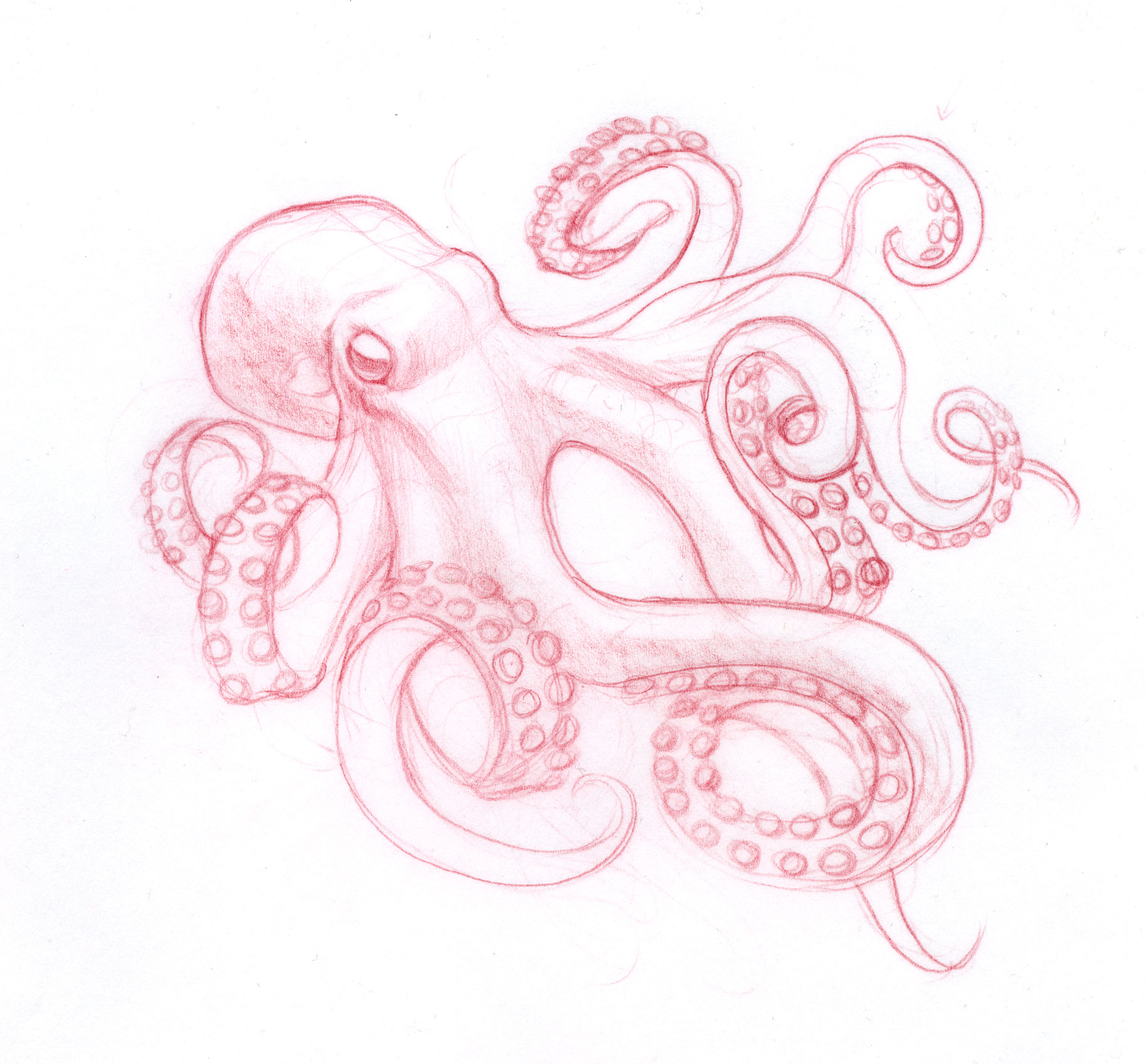 Drawn tentacle traditional Me drawing Pinterest DrawingOctopus octopus