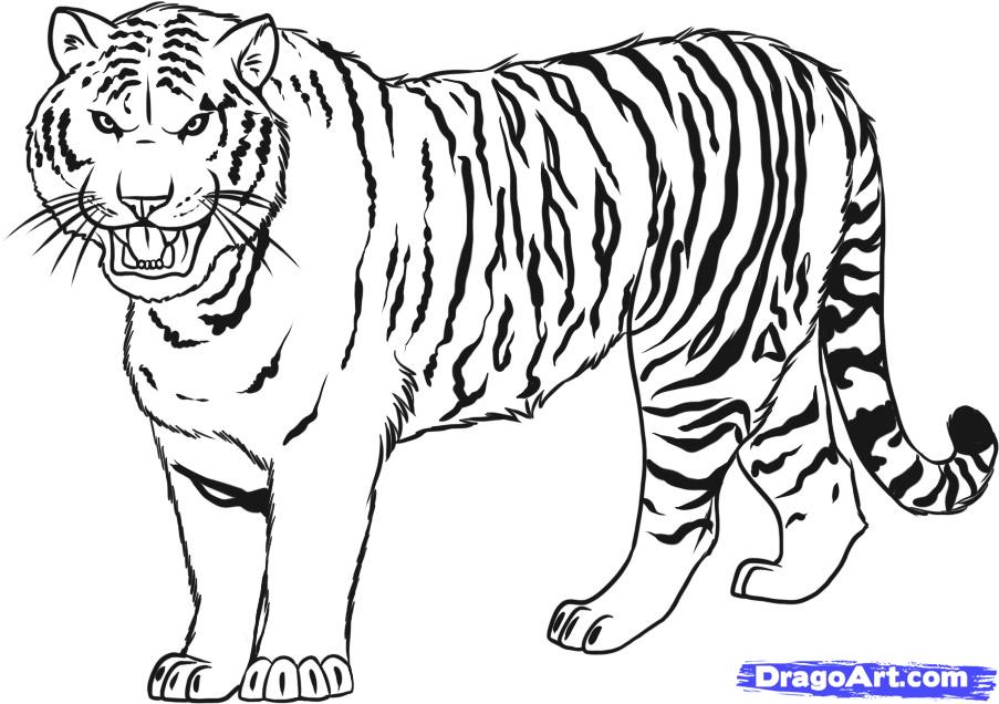 Drawn tigres Drawing Kids by a Animals