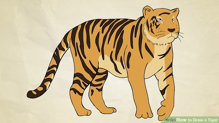 Drawn tiiger Step a a Tiger to
