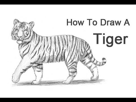 Drawn tigres To (with wikiHow Ways Draw