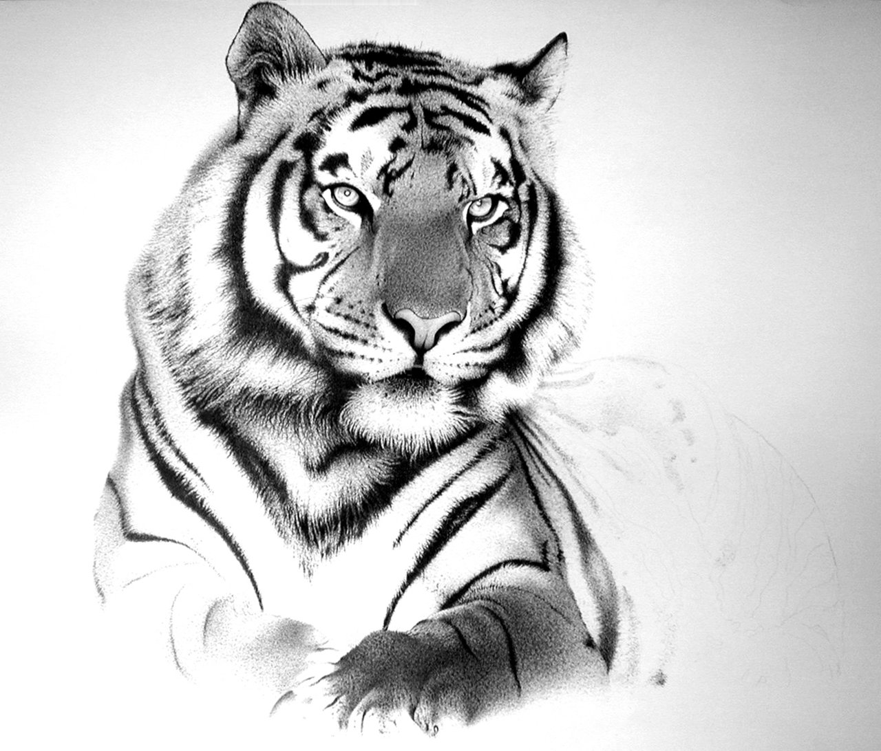 Drawn tigres 2014 artistic pictures tiger traditional