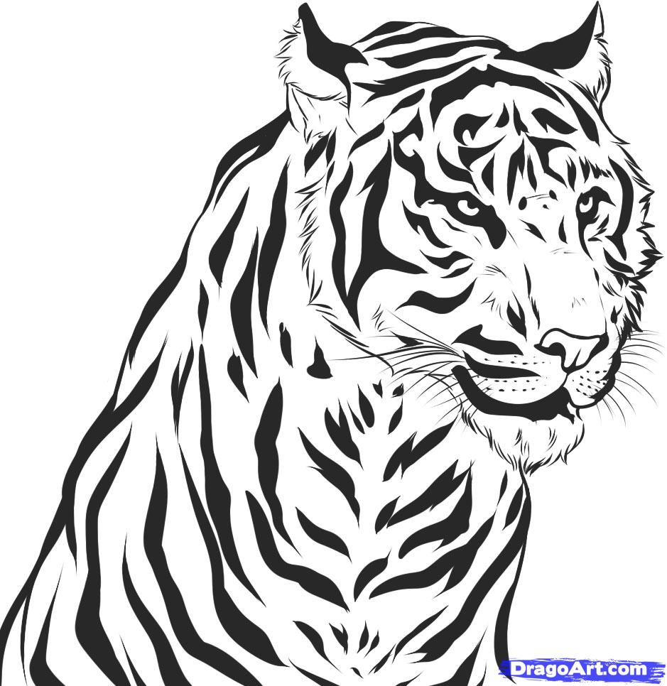Drawn tiiger Tiger by a Realistic Step