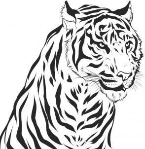 Drawn tiiger Tiger a ideas on Tiger