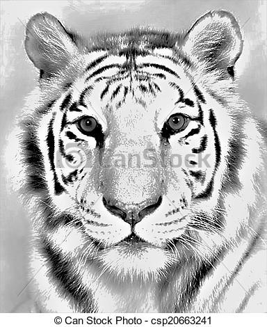 White Tiger clipart bengal tiger Front Bengal csp20663241 Tiger Drawing