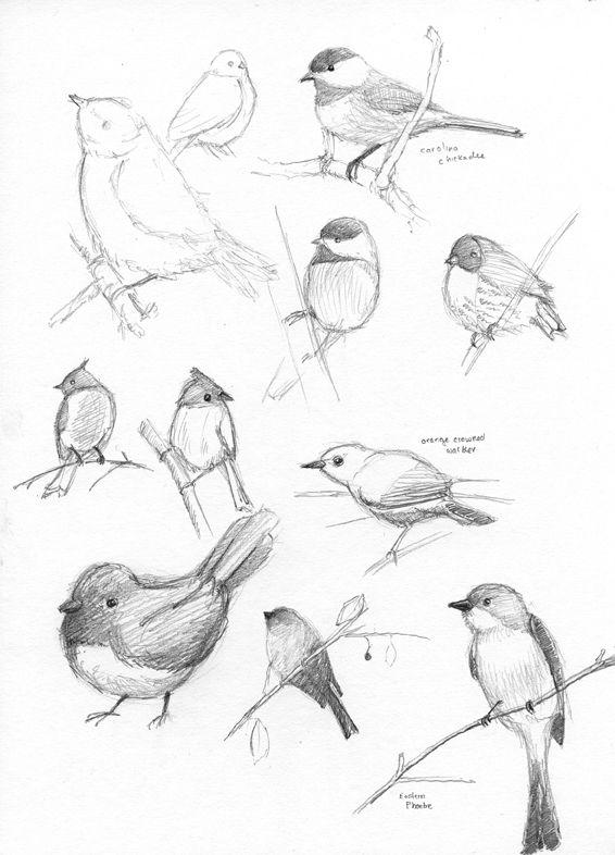 Nightingale clipart maya bird On Drawings tweet bird birds